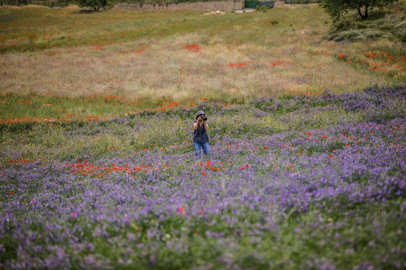 Una persona hace una fotogragía en un campo lleno de amapolas. Las amapolas ponen los puntos sobre el paisaje. Son acentos de rojo vivo, como una crin, espolvoreada. Parece todo un sueño digital. Un avatar impresionista.